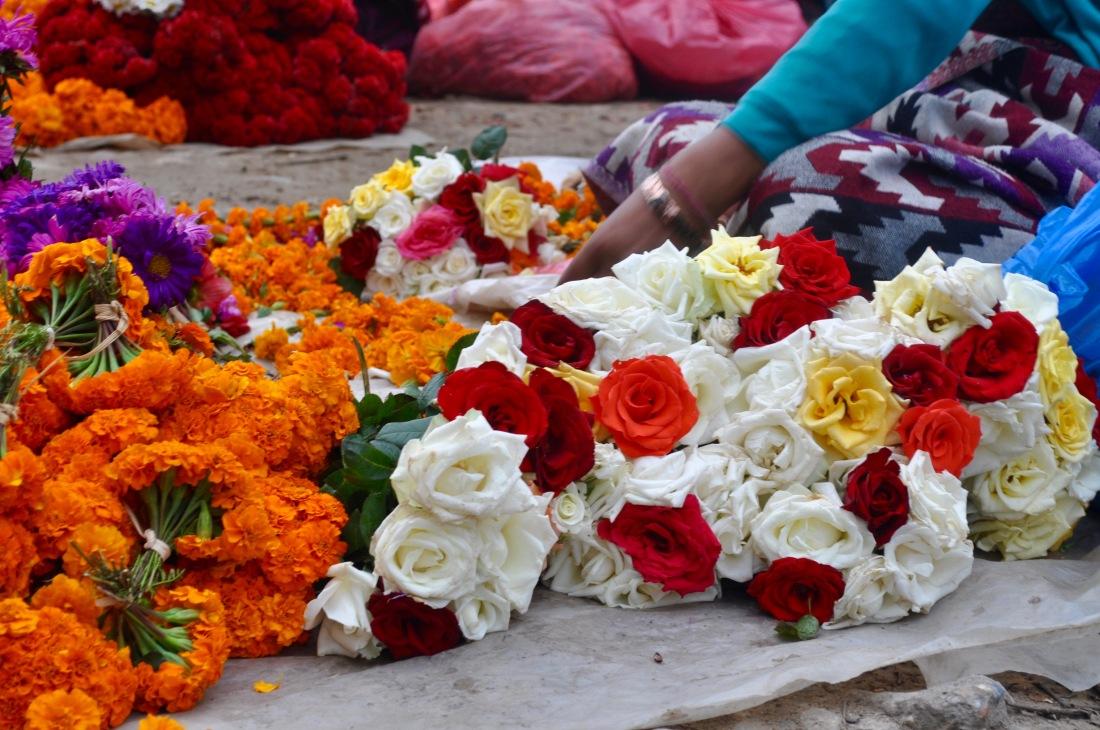 nepal-sept-2016-swyambu-roses-1